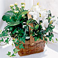 Gift Baskets, flowers and Gifts